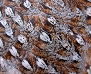 Feathers on the back of a grouse
