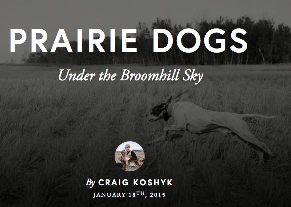 Prairie Dogs Under the Broomhill Sky, by Craig Koshyk